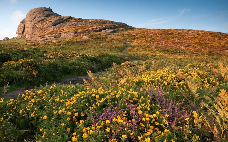 Dartmoor National Park is a 365 square-mile wilderness of wild moors, wooded glades, fairy-tale castles, cute villages and ancient hamlets - Moorefam