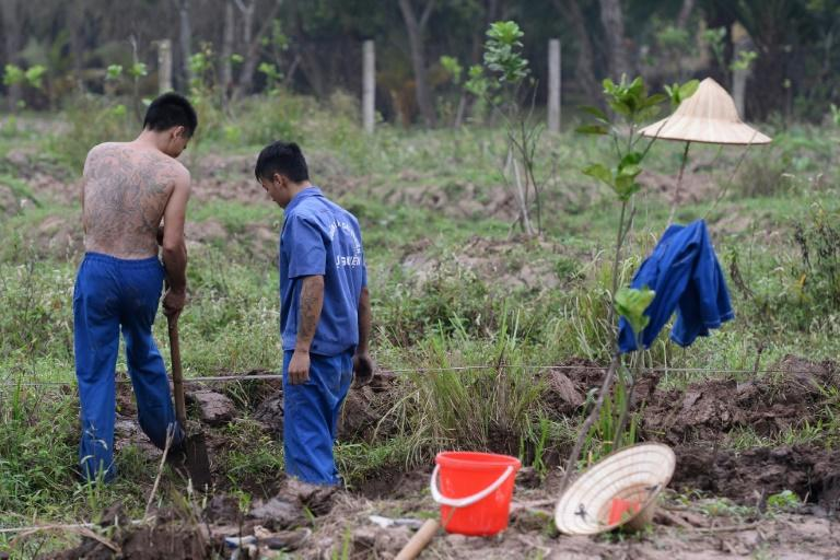 Vietnam sends tens of thousands of drug users to compulsory drug rehabilitation centres -- authorities call it 'work therapy' but critics warn it is forced labour for little pay