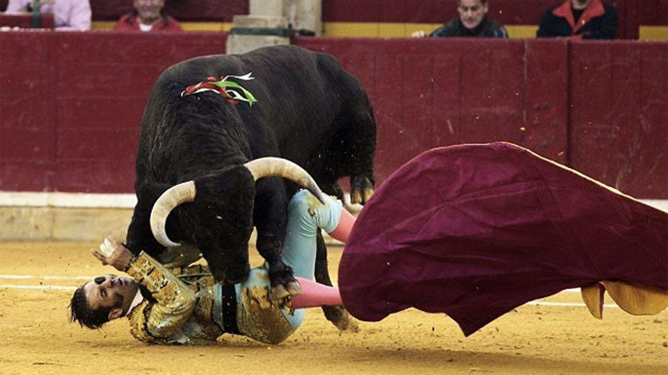 The huge beast charged at Padilla and took him to the floor using its horns.Photo: AFP