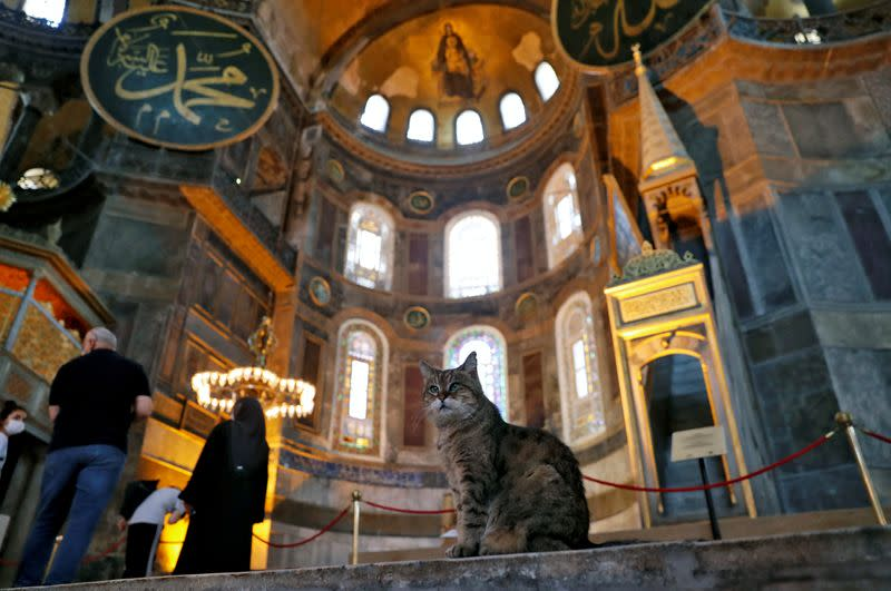 Gli the cat can stay even as Istanbul's Hagia Sophia changes