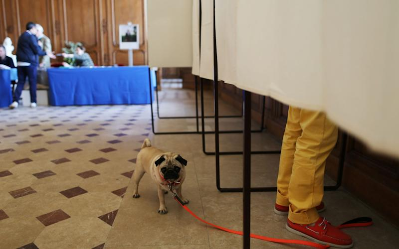 A dog waits outsode a polling booth as his owner prepares to cast his ballot in Caen, northwestern France - Credit:  CHARLY TRIBALLEAU/AFP