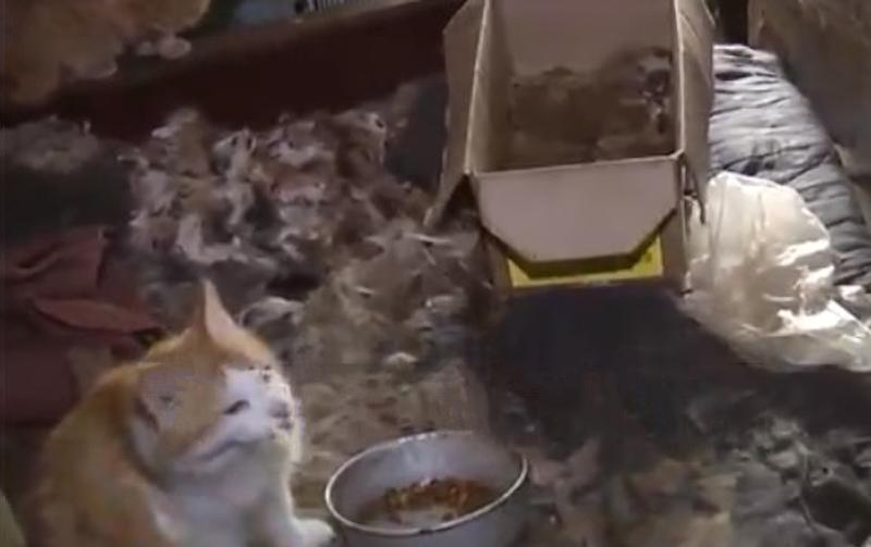 A cat among the squalid conditions where Nadezhda Bushueva lived.