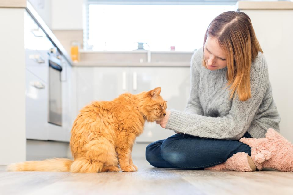 There are an estimated 10.2 million owned cats in the UK (Cats Protection)
