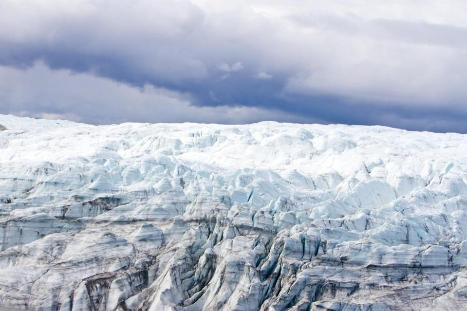 Scientists shocked to discover plants under mile-deep ​Greenland ice