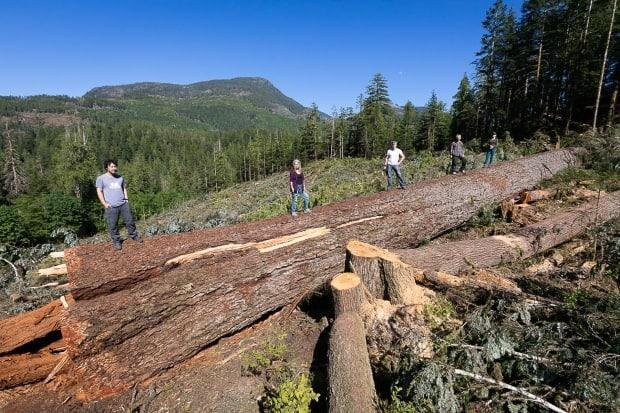 Timber in the Nahmint Valley after the trees were logged.