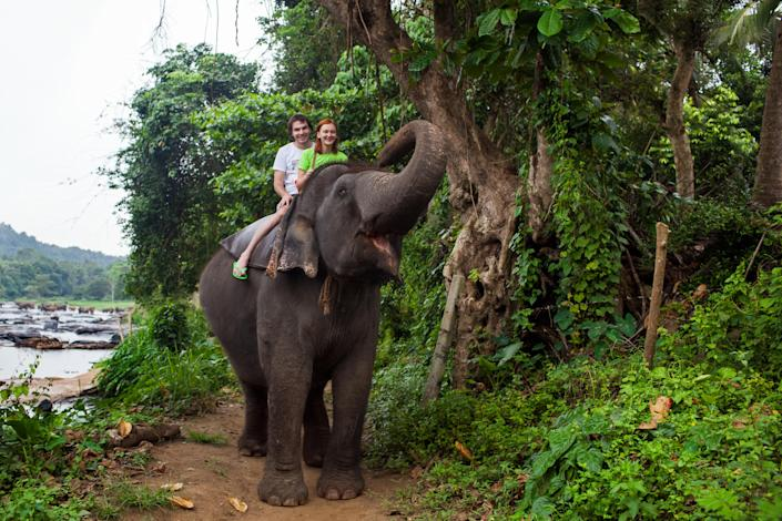 Tourists ride on an elephant in Pinnewala, Sri Lanka. A caretaker at African Lion Safari, located between Hamilton and Cambridge, Ont., was injured by one of the elephants at the facility earlier this week. (Getty)