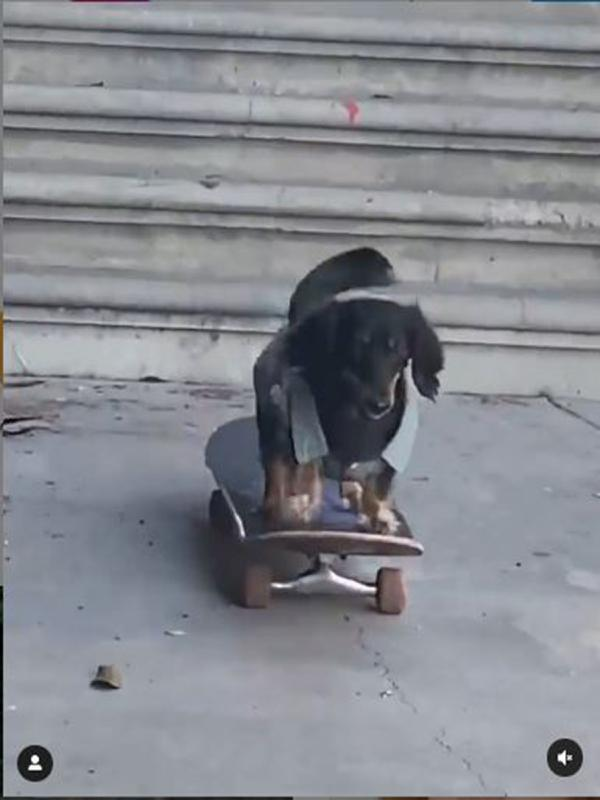 Anjing mahir main skateboard (Screenshot of Instagram/@Instagram)