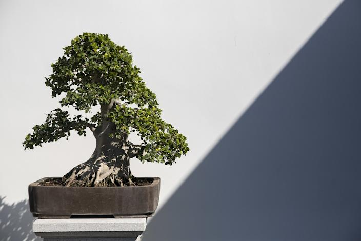 "One of Che Zhao Sheng's penjing at the newly expanded Chinese Garden. <span class=""copyright"">(Josie Norris / Los Angeles Times)</span>"