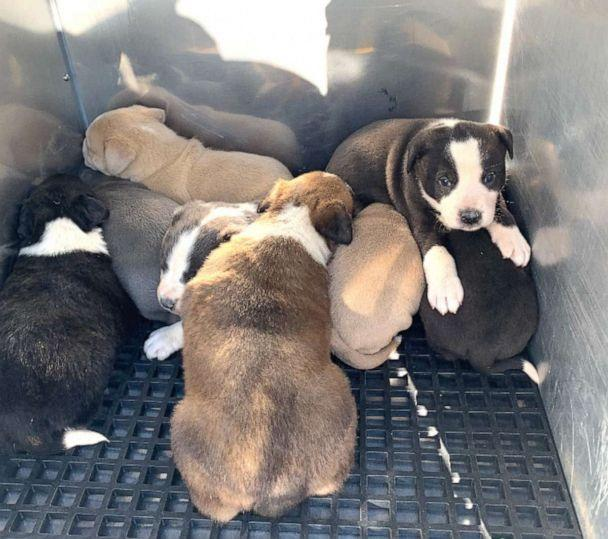PHOTO: Captain Fred Ray said none of the puppies were injured. (Courtesy Fred Ray)