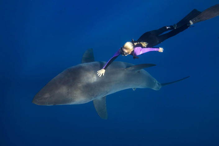 Meet the woman dispelling the myths about one of the worlds most feared ocean predators by swimming without protection with great white sharks. Petite beauty Ocean Ramsey travels the globe swimming with many species of sharks hoping to prove they are nothing like their Jaws film reputation. In these incredible photographs friend Juan Oliphant caught on camera the moment a massive 17-foot Great White let Ocean tail ride through the deep. Shark conservationist Ocean, who is also a scuba instructor, model and freediver, swam with the massive fish in waters off Baja Mexico last year. PIC BY JUAN OLIPHANT / CATERS NEWS