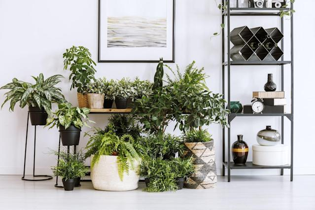"<p>Whether you have a green thumb or not, you're probably privy to the many benefits of <a href=""https://www.goodhousekeeping.com/home/gardening/advice/g1285/hard-to-kill-plants/"" rel=""nofollow noopener"" target=""_blank"" data-ylk=""slk:live plants"" class=""link rapid-noclick-resp"">live plants</a>. They can help purify the air, reduce stress, and even <a href=""https://www.goodhousekeeping.com/home/organizing/a32066774/marie-kondo-joy-at-work-book/"" rel=""nofollow noopener"" target=""_blank"" data-ylk=""slk:boost your productivity"" class=""link rapid-noclick-resp"">boost your productivity</a>. And let's not overlook their ability to create visual interest in your home. That said, finding the right plant can be quite challenging, as there are countless easy-to-care-for varieties that can breathe life into your space. From fiddle leaf fig trees that don't require a ton of water to striking palm plants that will take you back to your <a href=""https://www.goodhousekeeping.com/life/travel/g4297/best-coastal-towns-in-america/"" rel=""nofollow noopener"" target=""_blank"" data-ylk=""slk:last beach getaway"" class=""link rapid-noclick-resp"">last beach getaway</a>, here are 10 of the best aesthetic plants you can find online right now. </p>"