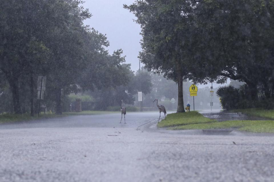Cranes cross the road during a rainstorm from Tropical Storm Elsa, Wednesday, July 7, 2021 in Westchase, Fla. The Tampa Bay area was spared major damage as Elsa stayed off shore as it passed by. (Arielle Bader/Tampa Bay Times via AP)