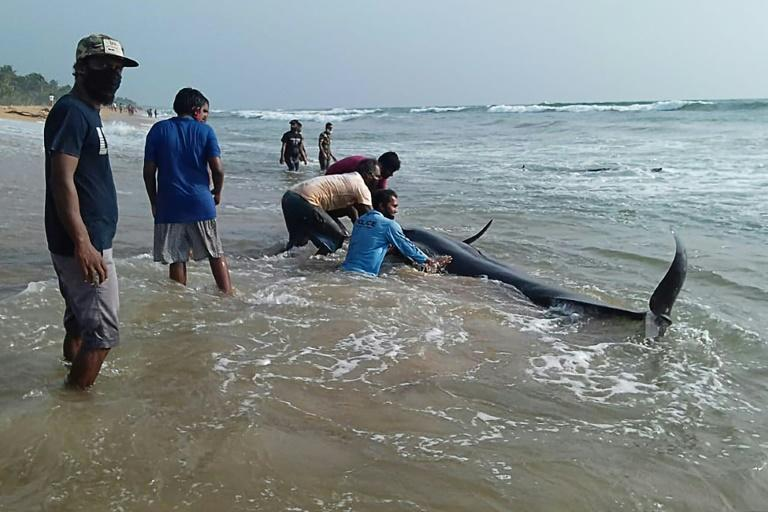 The causes of mass strandings remain unknown