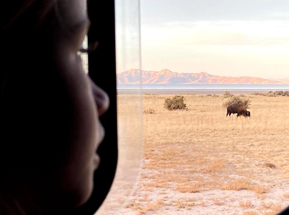 The author's 6-year-old woke her up one morning in November 2020 to point out bison in their campsite on Antelope Island in Utah. (Photo: Courtesy of Kelly Burch)