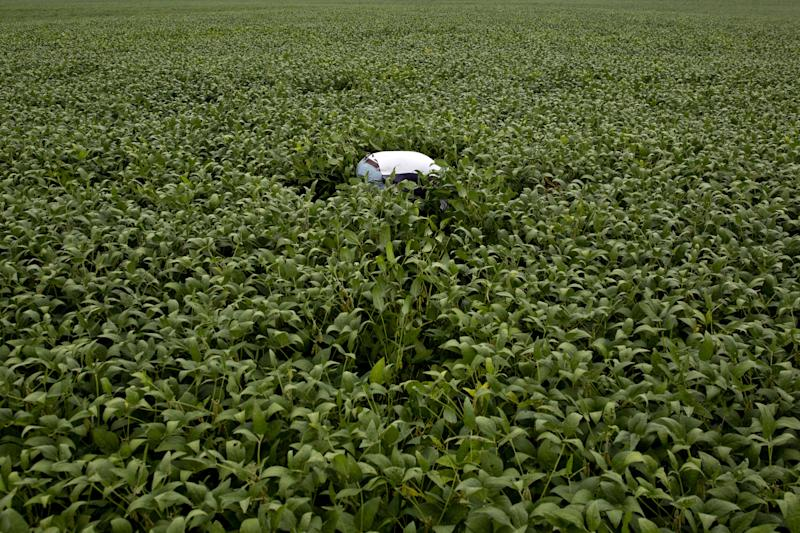 U.S. Government Shutdown Leaves Big Ag Data Shrouded in Mystery