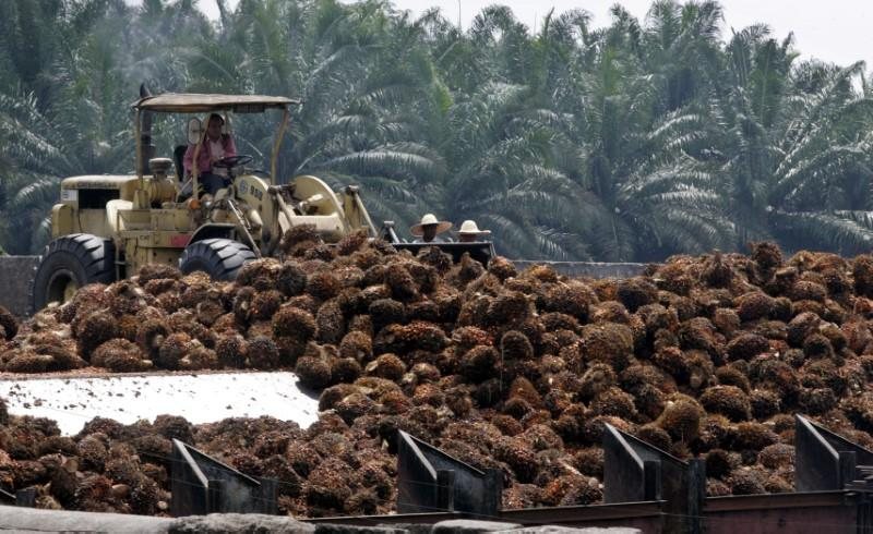 Palm oil falls 2.8% on concerns over Malaysia-India tensions