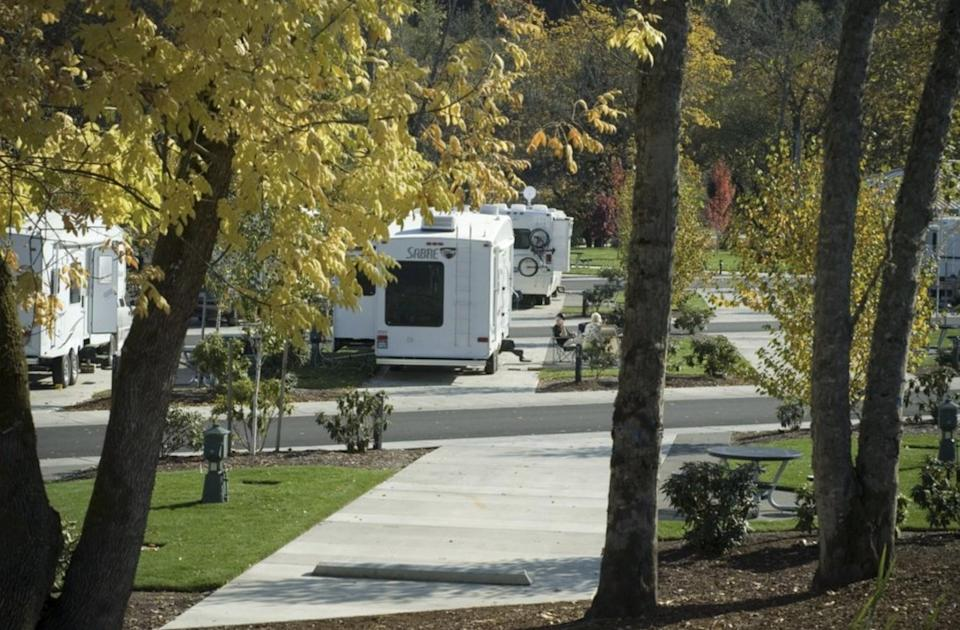 RVs parked in spaces under trees