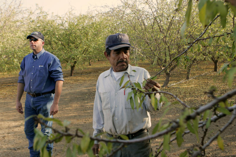 "FILE - In this Dec. 10, 2008, file photo Shawn Coburn, a farmer who grows thousands of acres of almonds on the west side of Central California's Fresno County, and his foreman, Juan Guadian, right, inspect an almond orchard in Mendota, Calif. Coburn, who is politically active, said the mandatory E-Verify plan, which would require all American businesses to confirm their employees are legally entitled to work in the U.S., would be disastrous. ""I don't think it's going to happen, but if it does it would throw the California economy for a loop,"" he said of an industry where 80 percent of the field workers are illegal immigrants. (AP Photo/Marcio Jose Sanchez, File)"