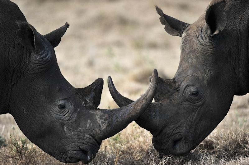 China allows rhino horn, tiger bone to be traded in 'special cases'