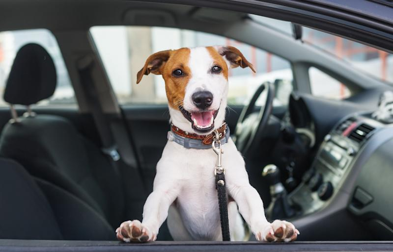 Ride-hailing app SpotOn aims to make traveling with your pet easier. (Courtesy: Getty)