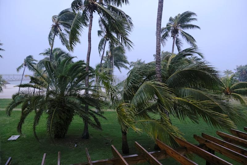 Palm trees blow in the wind during the arrival of Hurricane Dorian in Marsh Harbour, Great Abaco Island, Bahamas (Picture: Reuters)