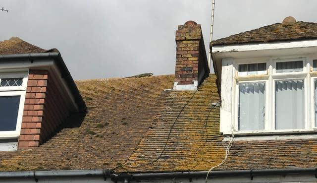 Firefighters rescue escaped iguana from pub roof
