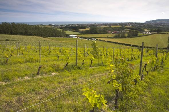 Take three: British vineyards - waiting on images