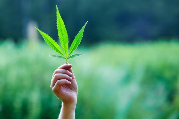 A person holding a marijuana leaf aloft in a field.