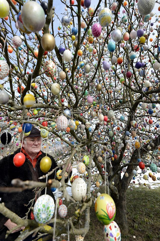 SAALFELD, GERMANY - MARCH 24: Pensioner Volker Kraft stands in front of his apple tree, which he and his family have decorated with 10.000 Easter eggs on March 24, 2013 in Saalfeld, Germany. The family started decorating an apple tree with painted hen's eggs in their garden in 1965 as amusement for child and grandchildren, now it is an attraction that draws thousands of visitors and tourists to the garden of the family. (Photo by Thomas Lohnes/Getty Images)