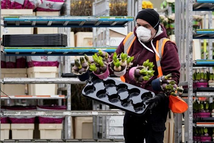 """With shoppers seemingly keener to stockpile essentials as the virus hits, the Royal Association of Bulb Producers said it was starting a campaign encouraging customers to """"buy flowers, not toilet paper"""" (AFP Photo/Kenzo TRIBOUILLARD)"""