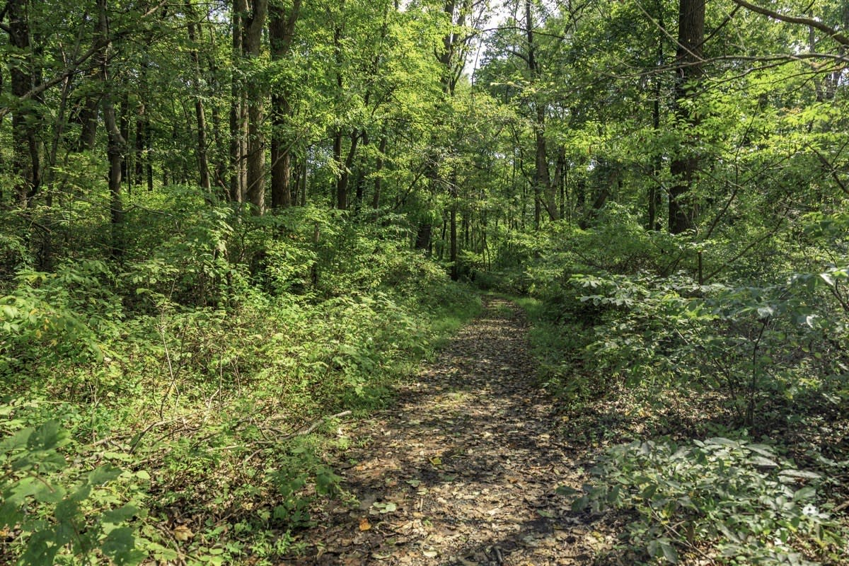 When lost in the woods or separated from your group while camping, what is the <em>most</em> important thing you'll need?