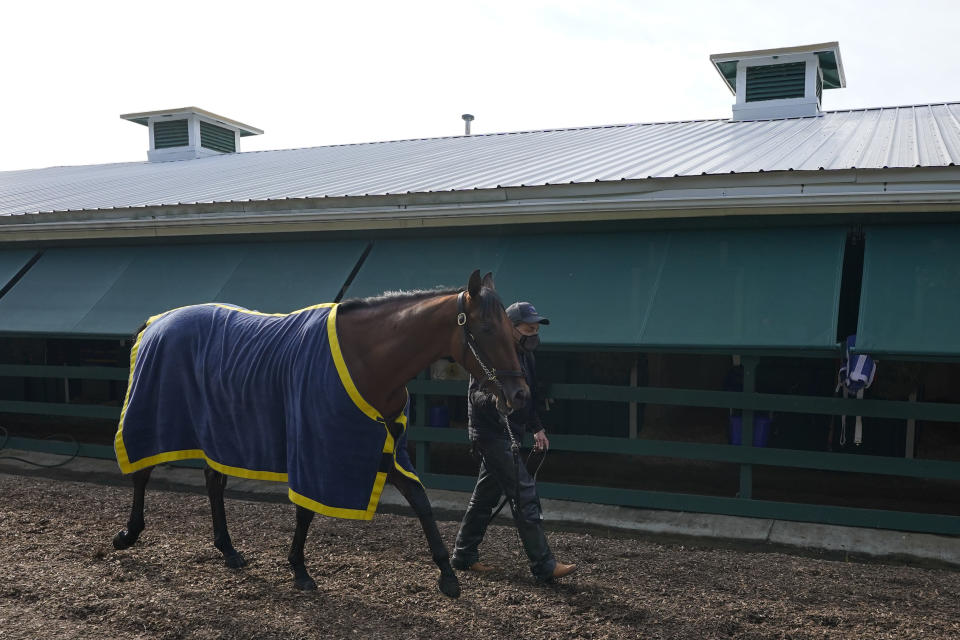 Preakness entrant Concert Tour walks with assistant trainer Jimmy Barnes after a training session ahead of the Preakness Stakes horse race at Pimlico Race Course, Wednesday, May 12, 2021, in Baltimore. (AP Photo/Julio Cortez)