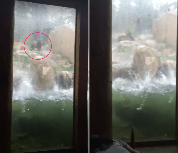 One of two bears (left) is seen attempting to dodge hail as it pounded the Cheyenne Mountain Zoo in Colorado Springs on Monday. (Storyful)