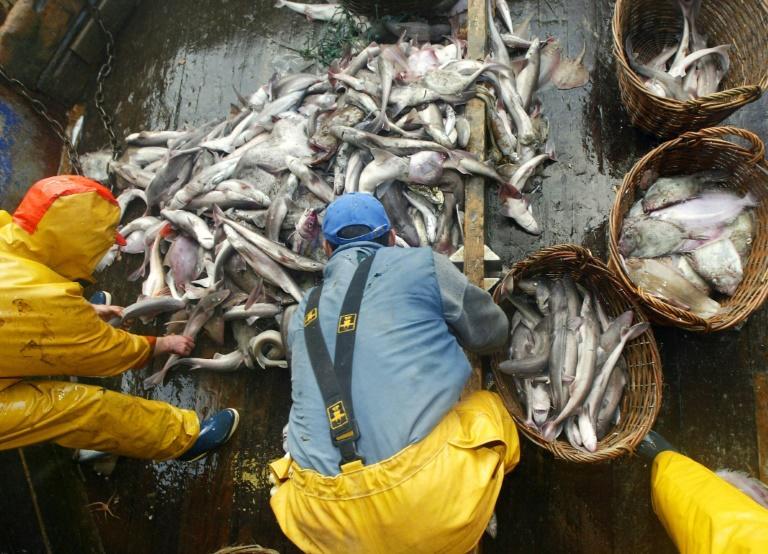 The UN estimates a third of the world's fish stocks were harvested at unsustainable levels in 2015 (AFP Photo/MARCEL MOCHET)
