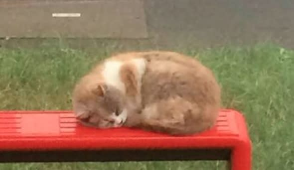 Commuters pay tribute to 'Bus Stop Cat' killed in brutal attack