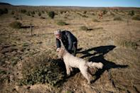 Paul Miros searches with his dog Baccio, an Italian Lagotto Romagnolo commonly used for truffle-hunting