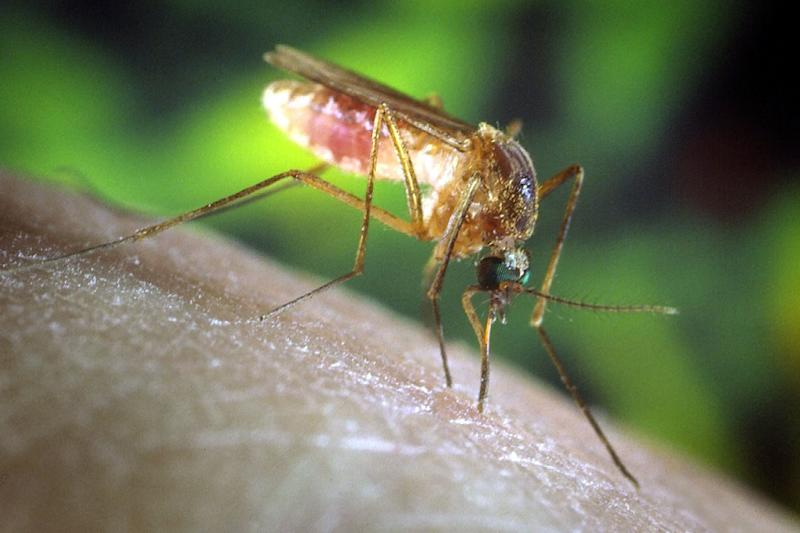 1st Eastern Equine Encephalitis Human Death Reported in Indiana