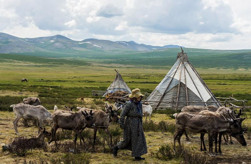 "<p>A day in the life of the Tsaatan community is unique to anything you could experience elsewhere. In the morning the <a href=""https://www.yahoo.com/travel/how-to-be-a-true-nomad-milking-camels-in-mongolia-128726032522.html"">reindeer are milked</a> and then set free to wander the taiga. They show up periodically during the day and the herders tend to them as needed. </p><p><i>(Photo: Alesha Bradford / <a href=""http://www.nomadasaurus.com"">NOMADasaurus</a>)</i></p>"