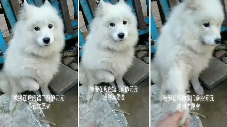 A dog in China bound for slaughter was rescued by a passerby. Source: Douyin/8143879
