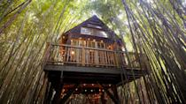 """<p>Inside a bamboo forest in an animal rescue farm is the <a href=""""https://www.airbnb.com/rooms/13245035"""" class=""""link rapid-noclick-resp"""" rel=""""nofollow noopener"""" target=""""_blank"""" data-ylk=""""slk:Alpaca Treehouse,"""">Alpaca Treehouse,</a> a two-story treehouse with two beds, one-and-a-half bathrooms, a marble bath, electricity, and more amenities. Play with the alpacas and llamas, all for $395 a night.</p>"""