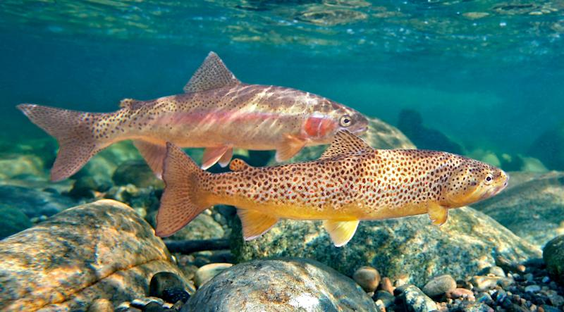 Fly Fishing, Environmental Conservation, Trout, River