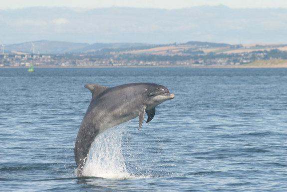 Hey Flipper! Dolphins Use Names to Reunite