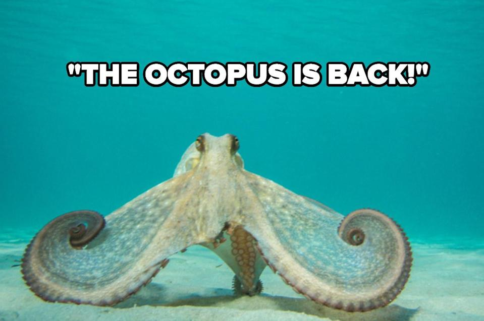"""""""the octopus is back"""" over an octopus in the water"""