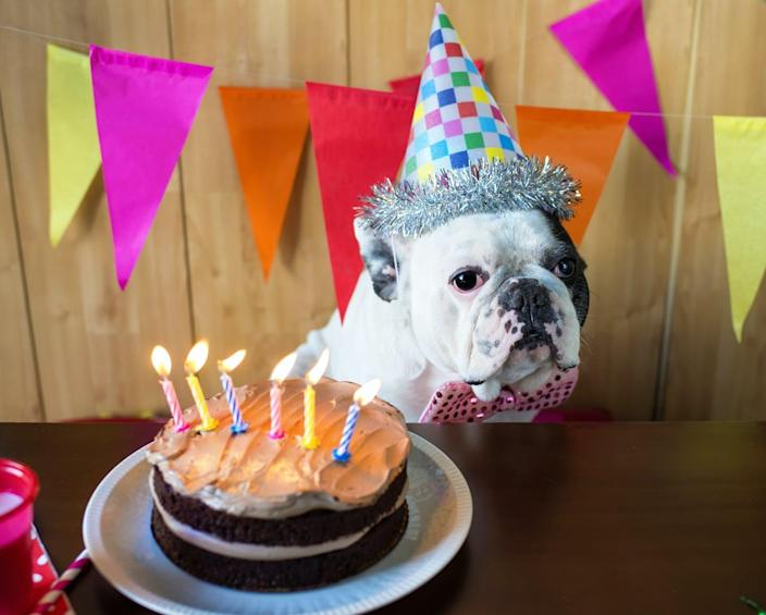 "<span class=""caption"">Did anyone check the number of candles on here?</span> <span class=""attribution""><a class=""link rapid-noclick-resp"" href=""https://www.shutterstock.com/image-photo/dog-race-french-bulldogs-on-birthday-398117596"" rel=""nofollow noopener"" target=""_blank"" data-ylk=""slk:KikoStock/Shutterstock.com"">KikoStock/Shutterstock.com</a></span>"