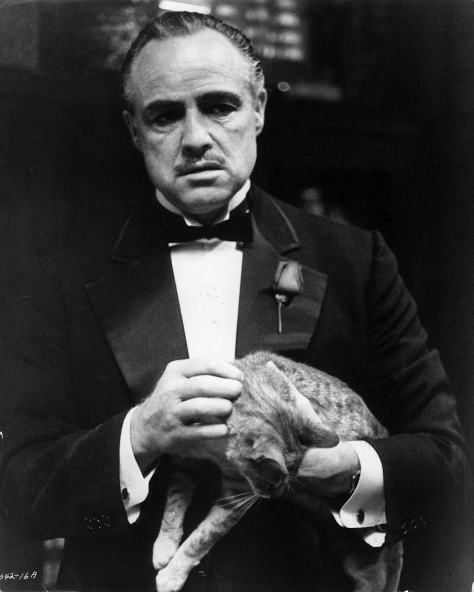 """<p>The legendary actor's rule breaking habits didn't sit well with his schooling. Brando was first <a href=""""https://www.businessinsider.com/celebrity-high-school-dropouts-2012-4#marlon-brando-5"""" rel=""""nofollow noopener"""" target=""""_blank"""" data-ylk=""""slk:expelled"""" class=""""link rapid-noclick-resp"""">expelled</a> from high school for riding a motorcycle down the hallway. He was then sent to a military academy, where he again faced expulsion and never returned. </p>"""