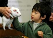 FILE PHOTO: Japan's Prince Hisahito touches a guinea pig as he visits the Ueno Zoological Gardens in Tokyo