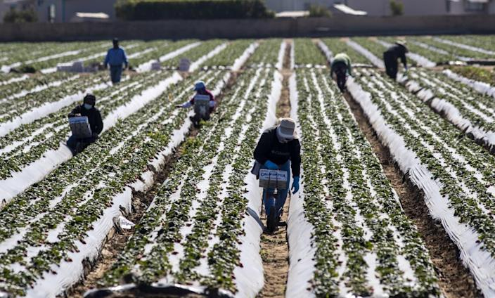 People walk and crouch in dirt rows in a field.