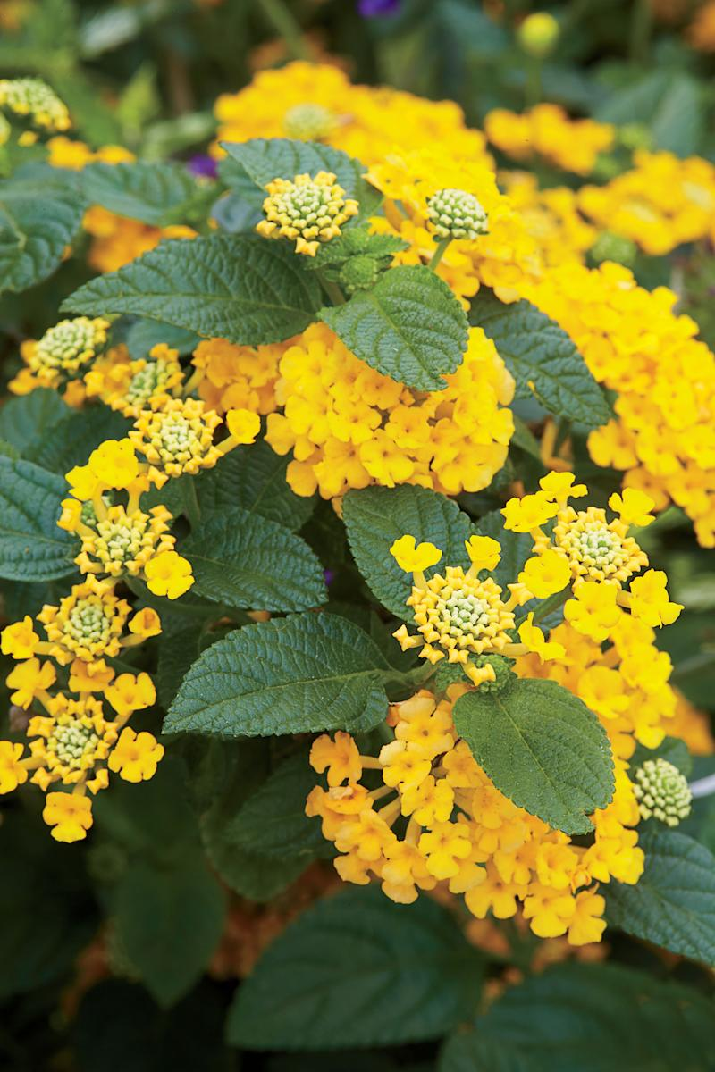 6 Heat-Tolerant Plants You Need In Your Southern Garden