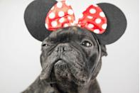 """<p>Of course, a Disney-inspired<a href=""""https://www.countryliving.com/life/kids-pets/tips/g1913/pet-halloween-costumes/"""" rel=""""nofollow noopener"""" target=""""_blank"""" data-ylk=""""slk:pet costume"""" class=""""link rapid-noclick-resp""""> pet costume</a> could be as easy as throwing on a pair of Minnie Mouse ears. </p>"""