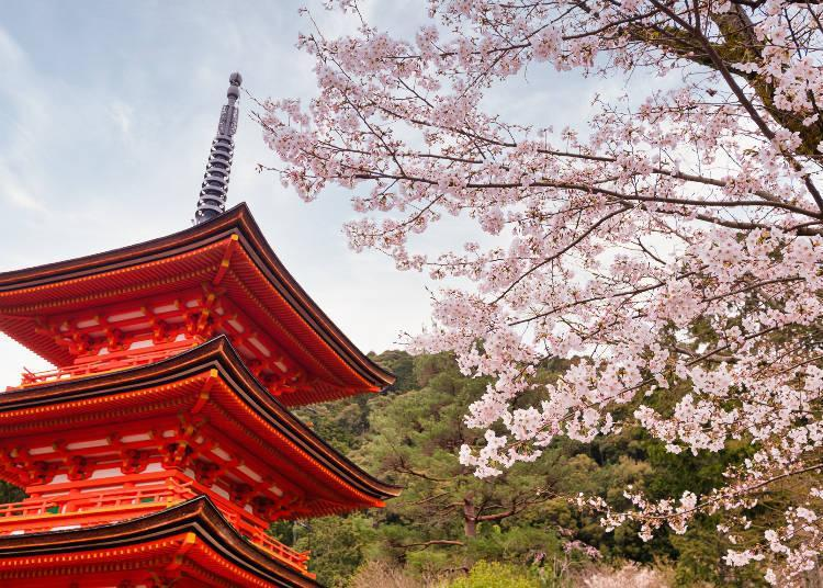 The sight of the three-storied pagoda and the cherry blossoms is one of Kiyomizu's highlights